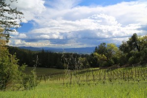 Cade-Winery-Napa-Valley (1)