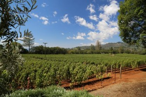 Arkenstone-Vineyards (2)