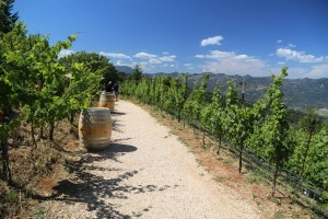 Barnett-Vineyards (9)