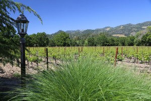 Benessere-Winery-Napa-Valley (6)