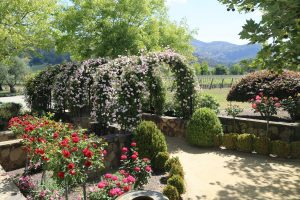Cliff-Lede-Winery (2)