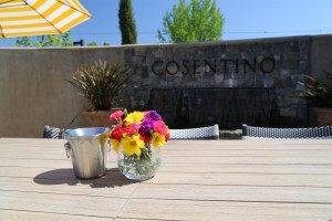Cosentino-Winery-Napa-Valley (2)