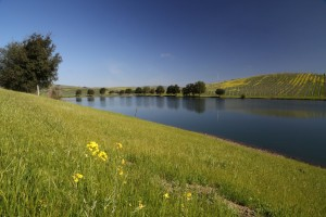 Cuvaison-Carneros-Lake