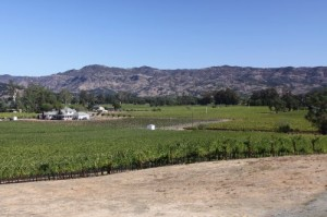 Darms-Lane-Winery-Overview