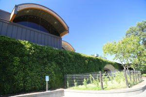 Domain-Chandon-Napa-Valley (3)