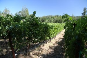 Dyer-Vineyard (1)