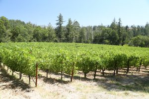 Dyer-Vineyard (2)