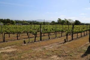 Fotinos-Vineyard (1)