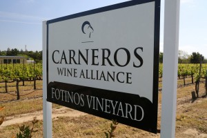 Fotinos-Vineyard (2)