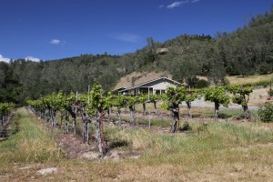 G-Cook-Winery (1)