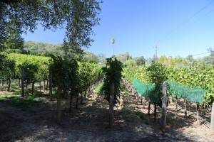 Grace-Family-Vineyards (1)