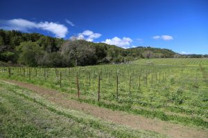 hendry-ranch-napa-3