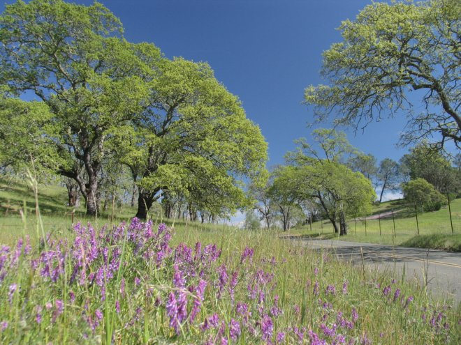 Howell-Mountain-Road-Spring