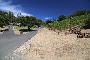 Ilsley-Vineyards (3)