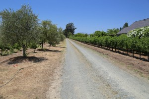 Jaffe-Estate-Vineyards (1)