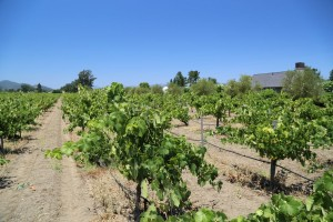 Jaffe-Estate-Vineyards (3)