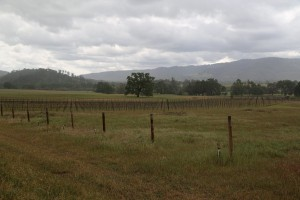 James-Creek-Vineyards (1)