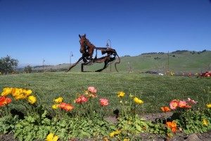 Jamieson-Ranch-Vineyards (9)