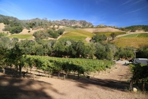 Jericho-Canyon-Vineyards (4)