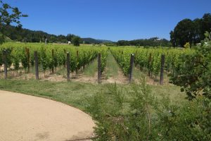 Larkmead-Estate-Winery (4)