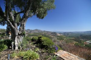 A brilliant view of our Napa Valley from Montagna Estate