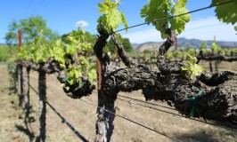 Napa Valley American Viticultural Areas