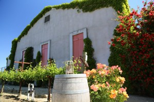 Obrien-Estate-Napa-Valley (24)