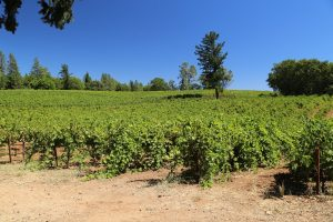 Outpost-Winery-Howell-Mountain (14)