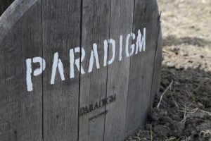 Paradigm-Winery (4)