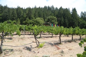 Parry-Vineyards