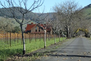 Perata-Vineyards (1)
