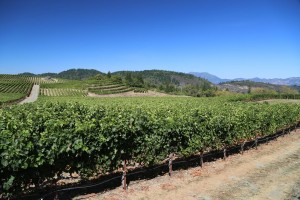 Pride-Mountain-Vineyards (5)