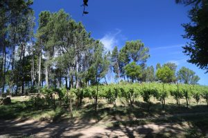 Random-Ridge-Vineyards (1)