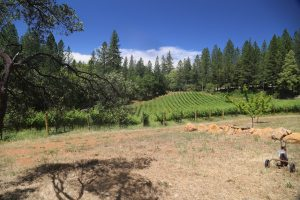 Red-Cap-Vineyards (3)