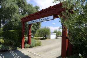 Redmon-Family-Winery-Napa (3)