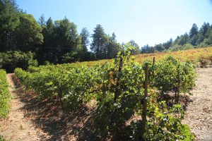 Ritchie-Creek-Vineyards (1)