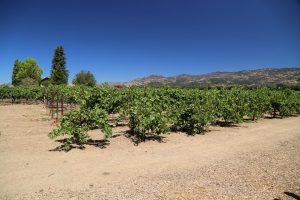 Robert-Biale-Vineyards (4)