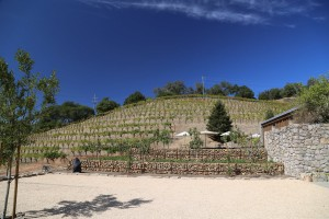 Robert-Sinskey-Winery (1)
