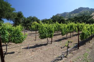 Robinson-Family-Vineyards (25)