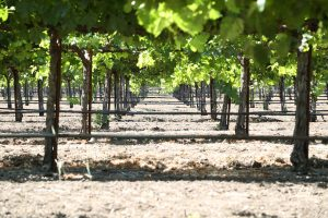 Sequoia-Grove-Winery (4)