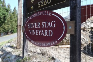 Silver-Stag-Vineyard (2)