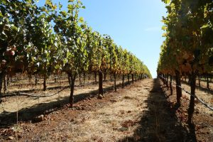 Spence-Vineyards-Napa-Valley (1)
