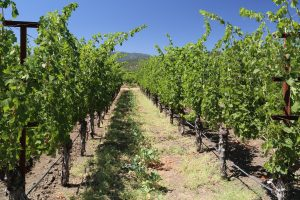 St-Helena-Winery (7)
