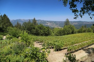 Stony-Hill-Vineyards (3)
