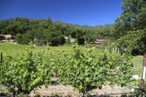 The-Terraces-Winery (10)