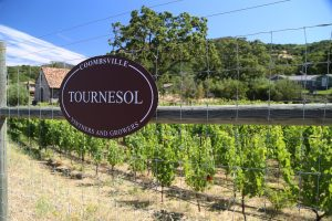Tournesol-Vineyard (2)
