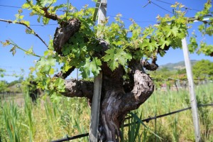 Tudal-Winery-Napa-Valley (7)