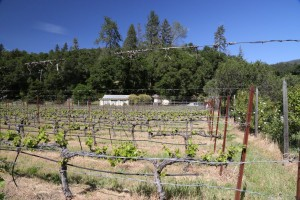 Wermuth-Winery (3)