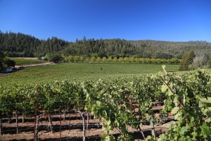 andersons-conn-valley-napa (3)