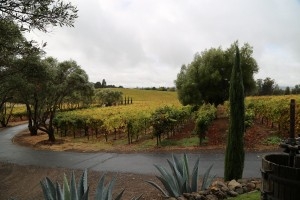 black-cat-vineyard-coombsville